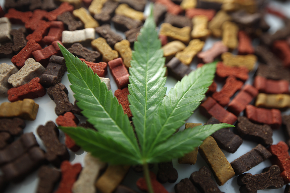consommation cannabis